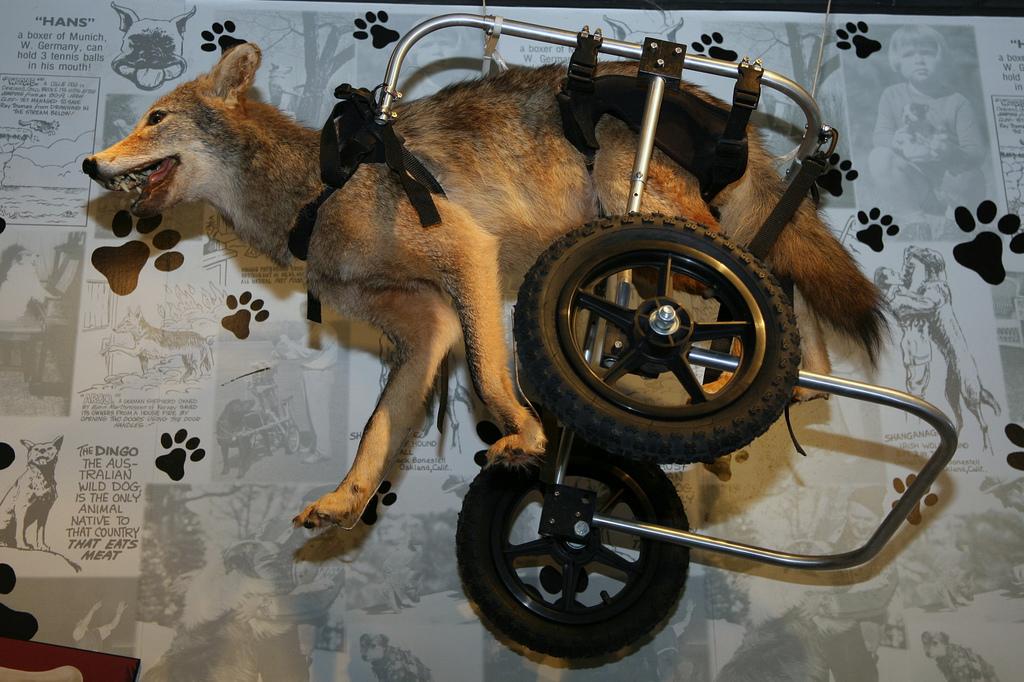 Wheelchair Rentals In Corvallis, OR